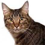 chats-sans-toits