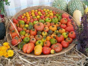 festival-des-1001-legumes